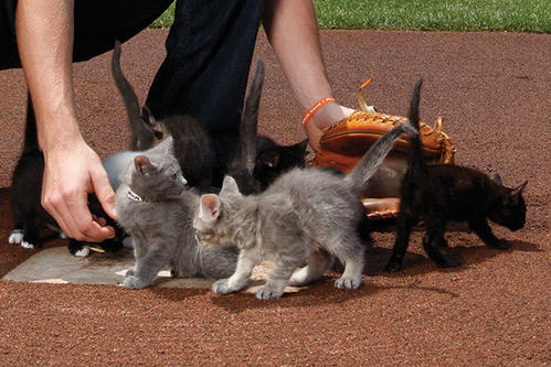 Catcher Matt Wieters has some fun with the litter of eight Mumzy kittens at home plate