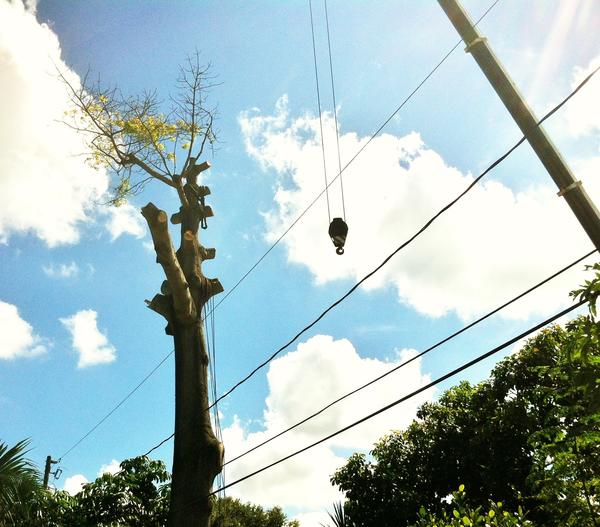 An experienced tree trimmer was shocked when he grabbed a chain that made contact with a power line.