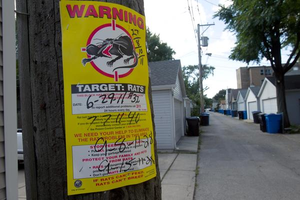 A rat-control poster in an alley on the North Side in September 2011.