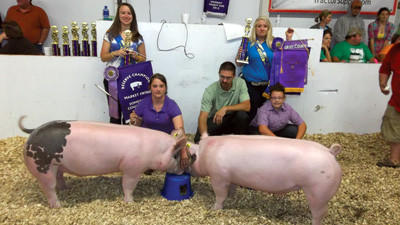 Paige Bowman, 12, of Rockwood, third from left, won grand champion Somerset County born and raised during the swine show at the Somerset County Fair Tuesday evening. Luke Maurer, 15, of Hollsopple won reserve in that category. They are pictured with show judge Rodney Spinler and fair royalty Courtney Brant, left, and Katie Marteney.