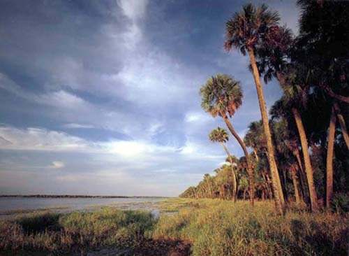 Florida Getaways of the Day - <b>Myakka River:</b> All alone ... and loving it