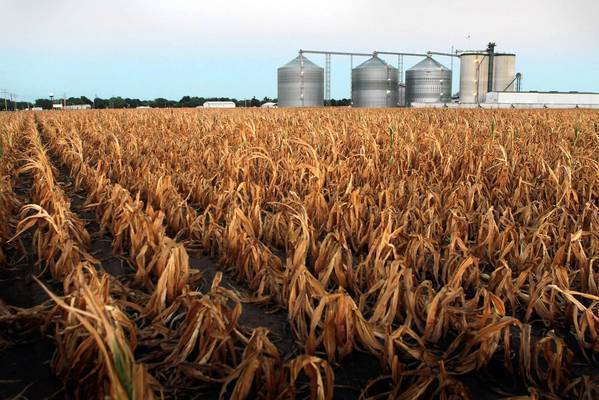 Under the Clean Air Act, the renewable fuel standard requires a minimum amount of biofuels be included in the U.S. fuel supply. Above, a field of dead corn sits next to an ethanol plant in Palestine, Ill.