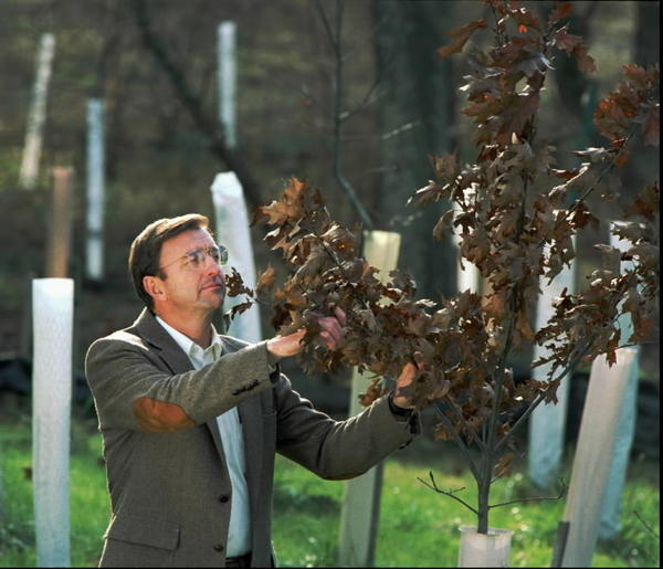 "Bernard Sweeney, director of the Stroud Water Research Center, examines new trees planted near a creek in Pennsylvania. Such plantings can earn farmers pollution ""credits"" that they could then sell to others needing to upgrade their water quality."