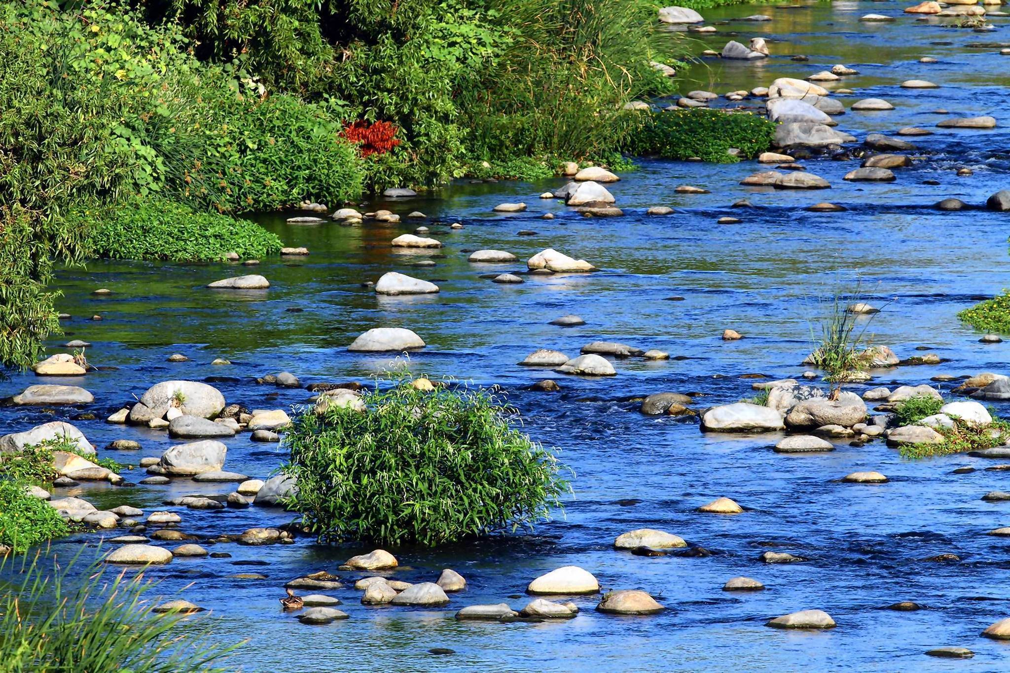 Walk along the l a river near griffith park hartford for Lake fishing near los angeles