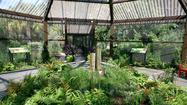 A view inside the Butterfly House at Airlie Gardens in Wilmington, N.C.