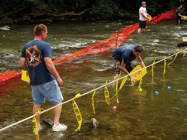 Sam Harvey, 43, left, of Funkstown, and Dan Stanley, 21, of Hagerstown, gather plastic ducks as they cross the finish line in Antietam Creek on Saturday at the Funkstown Volunteer Fire Co.'s duck race fundraiser.
