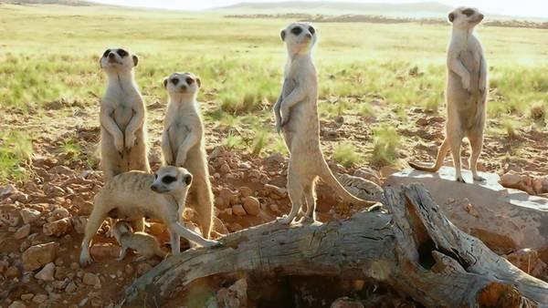 """""""Meerkats 3D"""""""