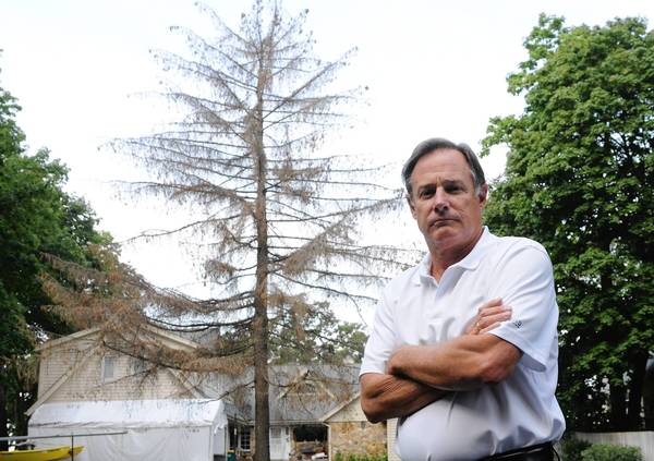 Bill Tortorello's Norway spruce was killed by a DuPont herbicide. The company has been slow to remove it from his yard in Fox Lake and pay compensation.