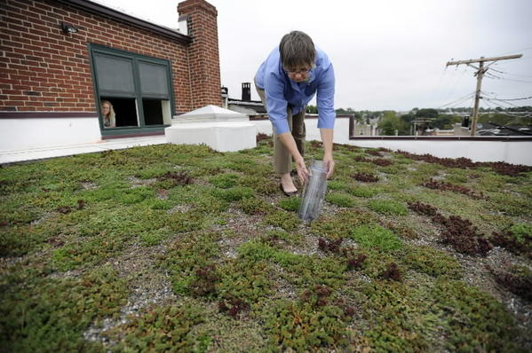 Grants to help groups plant trees, restore wetlands and install green roofs, like this one atop Blue Water Baltimore's building on Belair Road.