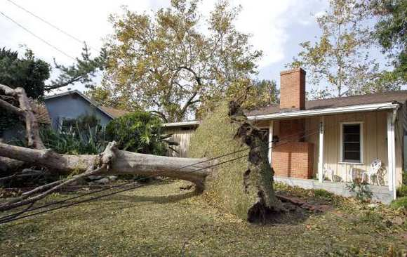 A tree in La Canada Flintridge was toppled by the powerful windstorm that hit the region on Nov. 30, 2011.