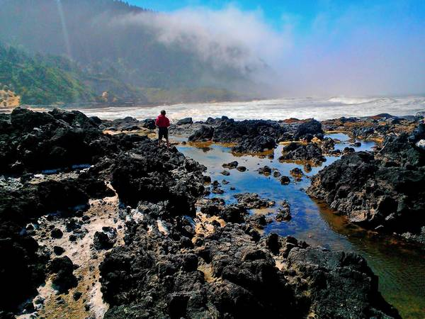 Sam Kohler, 11, searches tide pools at Devil's Churn on Oregon's Cape Perpetua. Starfish and muscles cling to rocks, below.