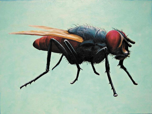 """I am Just a House Fly"" was inspired by nature."