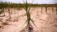 Drought hits Illinois