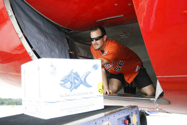 Orioles reliever Darren O'Day helps out as a Southwest Airlines employee, unloading baggage during a promotion at BWI.