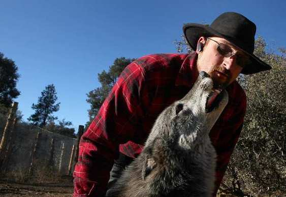 "Matthew Simmons gets a lick from his wolf dog, one of 29 that were rescued from small cells where they were bred and imprisoned in Anchorage, Alaska. They now live in a 20-acre wolf sanctuary in the Los Padres National Forest. <br /><br /><b> More: </b><a href=""http://articles.latimes.com/2011/dec/27/local/la-me-wolf-dogs-20111227"" target=""_blank"">Los Padres sanctuary goes to the rescue of wolf dogs</a>"