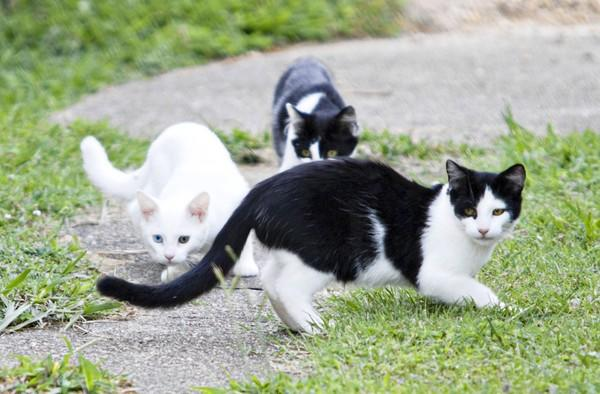 Feral cats live near Beverly Krams' home in Yorktown.