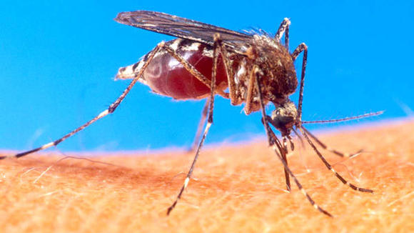 West Nile virus, transmitted by mosquitoes to humans, has killed five people in Michigan this year. Officials blame a mild winter and hot summer for a bumper mosquito population.