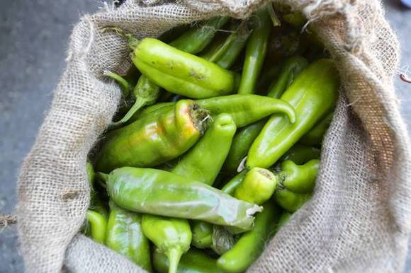 A bag of green chiles at the Green Chile Roast & Lunch.