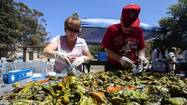 The cult of the Hatch green chile