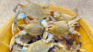 Marylanders looking to pile their picnic tables with crabs for one last send-off to summer this Labor Day will likely have to do so with a less-than-jumbo variety of the state's favorite crustacean, thanks to Hurricane Isaac.