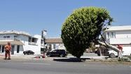 Tree removal for space shuttle arrival tempers excitement