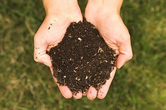 Aged compost adds vital major and minor nutrients to soil, making plants healthier.