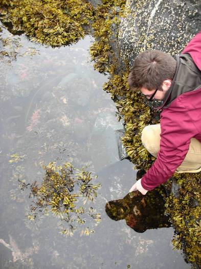 Tide-pooling on Kodiak Island, Alaska, gives you your own aquatic petting zoo