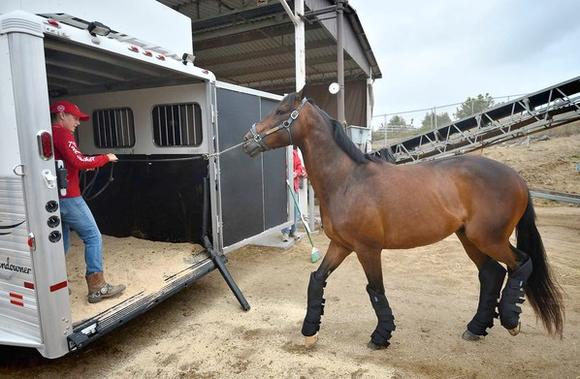 Red Bucket Equine Rescue Moves Horses out of Huntington Central Park Equestrian Center