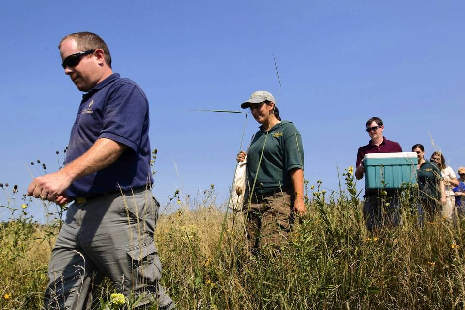 Lake County Forest Preserves Wildlife Biologist Gary Glowacki, Lincoln Park Zoo Reintroduction Biologist Allison Sacerdote-Velat and her colleague, lead keeper Michael Brown-Palsgrove, walk through a field before releasing endangered green snakes that they've nurtured back into a northern Lake County preserve.