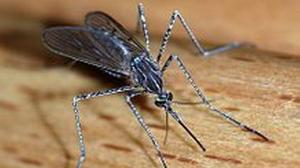Health officials report third Indiana West Nile death