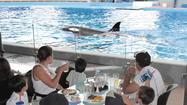 A new SeaWorld Orlando offer allows kids to eat for free at Dine With Shamu, a behind-the-scenes attraction at the theme park.