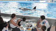 SeaWorld Orlando: Offer lets kids eat for free at Dine With Shamu