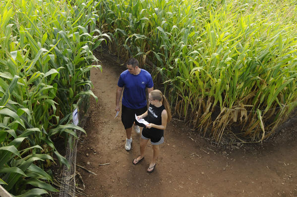 From left, Kelsey Schroyer, of Bristol and Daniella Senetcen of Terryville navigate the Lyman Orchards Corn Maze Friday afternoon.