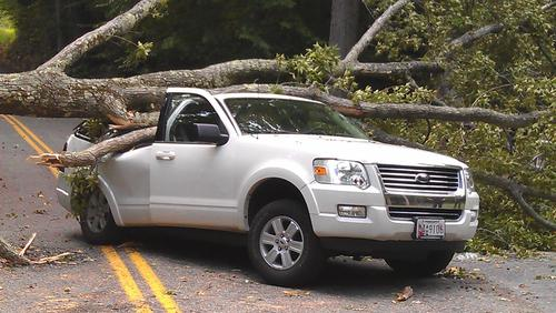 A gum tree fell on a Ford Explorer as it was backing out of a driveway on Clayton Road in Joppa Saturday afternoon.