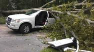 Tree falls on car with child inside [Pictures]