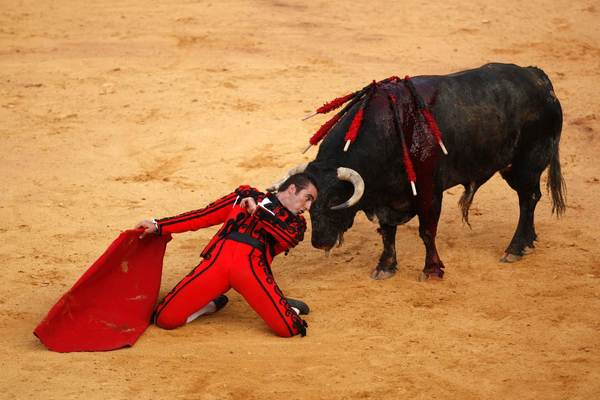 "Spanish bullfighter David Fandila 'El Fandi' kneels in front of a bull after performing a pass during a ""Corrida Goyesca"" bullfight in Ronda, southern Spain."