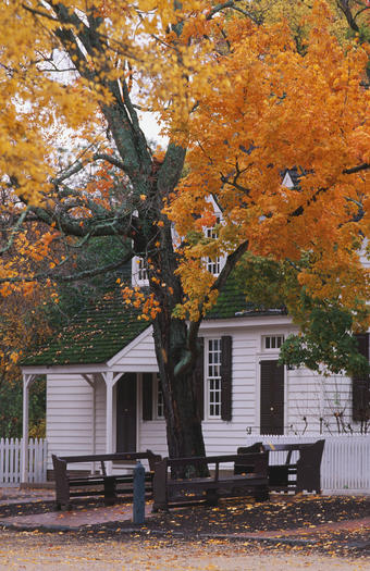 "The tour ""Tall Treasures"" features Colonial Williamsburg's historic trees."