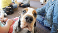 Pet therapy at McDaniel College [Pictures]