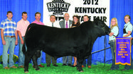 It was a banner year for Jessamine County livestock and showmen at the 2012 Kentucky State Fair in August, as local youth brought home titles in four different species categories, with three sets of siblings highlighting the awards.