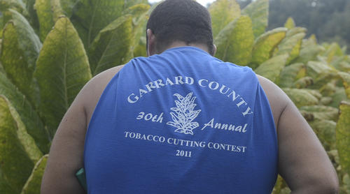 Photo Gallery: Garrard County tobacco cutting contest