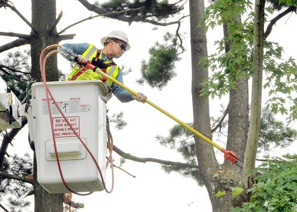 Bucket operator Julio Portillo trims silver maple and Eastern white pine trees along a private driveway off Stevenson Road, in an area that had a prolonged power outages during this summer's derecho storm.