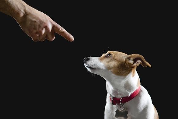 Doggie behavior