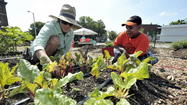 Fair celebrates Baltimore's growing urban farming scene