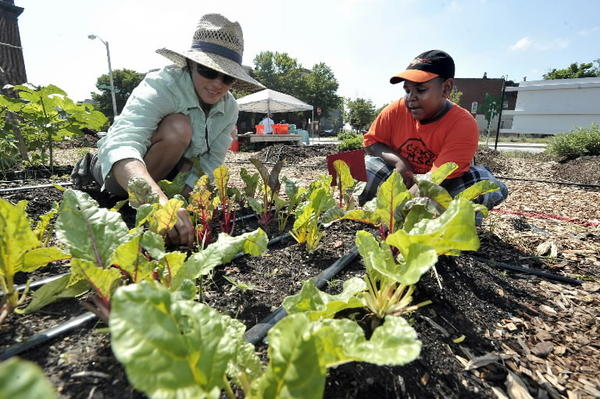 Elisa Lane, manager at Whitelock Community Farm in Reservoir Hill, and volunteer Timothy Alston pull weeds around Swiss chard. It's one of nine farms working more than 10 acres of formerly vacant lots in the city.