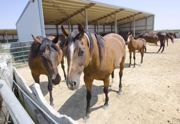 An online auction house sold dozens of indicted former treasurer Rita Crundwell's quarter horses for more than $1.6 million. A live auction for another 300 horses will be held Sept. 23-24 in Dixon.
