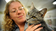 Crowded Anne Arundel animal shelter pleads for reprieve