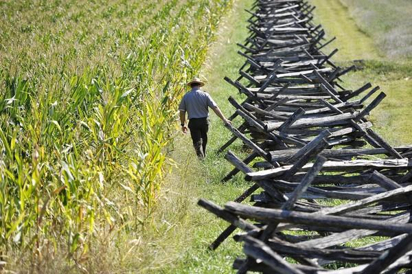 Ranger Brian Baracz walks in the Cornfield at Antietam National Battlefield park, where some of the fiercest Civil War fighting took place.