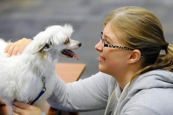 Therapy dogs on campus at McDaniel College