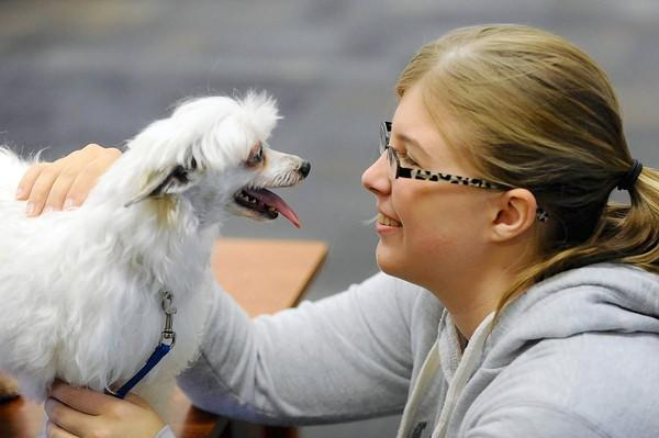 Freshman Andrea Pinder from Chestertown, Md., is greeted with a smile from Dizzy, a 7-year-old Chinese crested puff, at Whiteford Hall dorm on the campus of McDaniel College in Westminster, on Sept. 11. Dizzy, owned by Laurie Walters of Westminster, is one of the dogs with Keystone Pet Enhanced Therapy Services (KPETS) brought to college for weekly visits to help underclassmen from getting homesick.