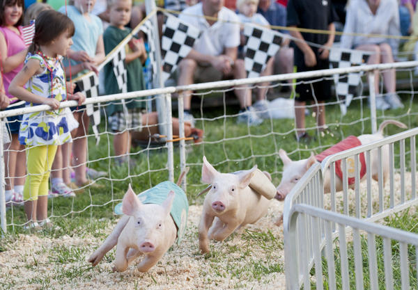 "Olivia Wallace, 4, from Odenton cheers for pig 4 for her group as the pigs go racing by. The pig races were put on by the ""Barn Yard Runners."""